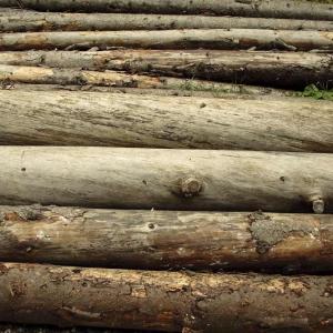 Jeżeli spalać to drewno