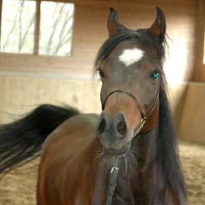 """""""Moja pasja do koni zaczęła się w moim dzieciństwie, kiedy spędzałem wspaniały czas na farmie mojego chrzestnego. Mój program hodowli koni arabskich czystej krwi został zapoczątkowany w 1986 roku i dzisiaj mamy około 35 koni na naszej farmie"""""""