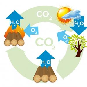 Obieg dwutlenku węgla w środowisku (schemat Cebud)
