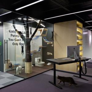 MacPaw, fot. Studio Projektowe Baraban +, architekt Nikolay Gulyk
