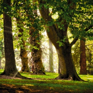 Opalanie drewnem a ekologia
