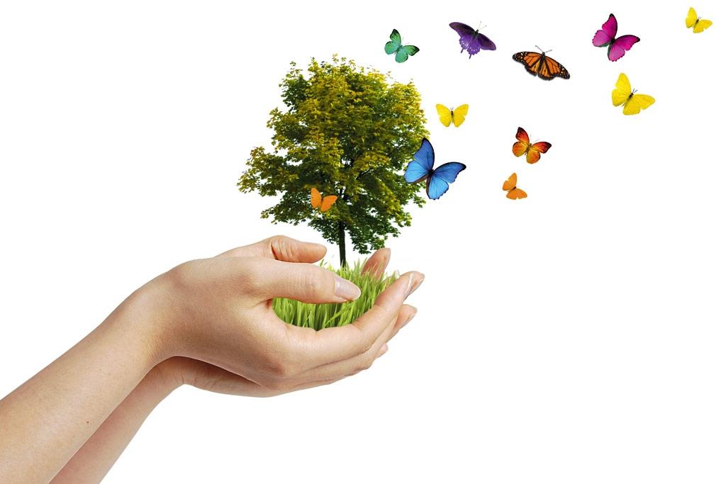 Ekologicznie czyli w zgodzie z przyrodą